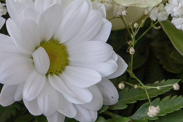 funeral flower header